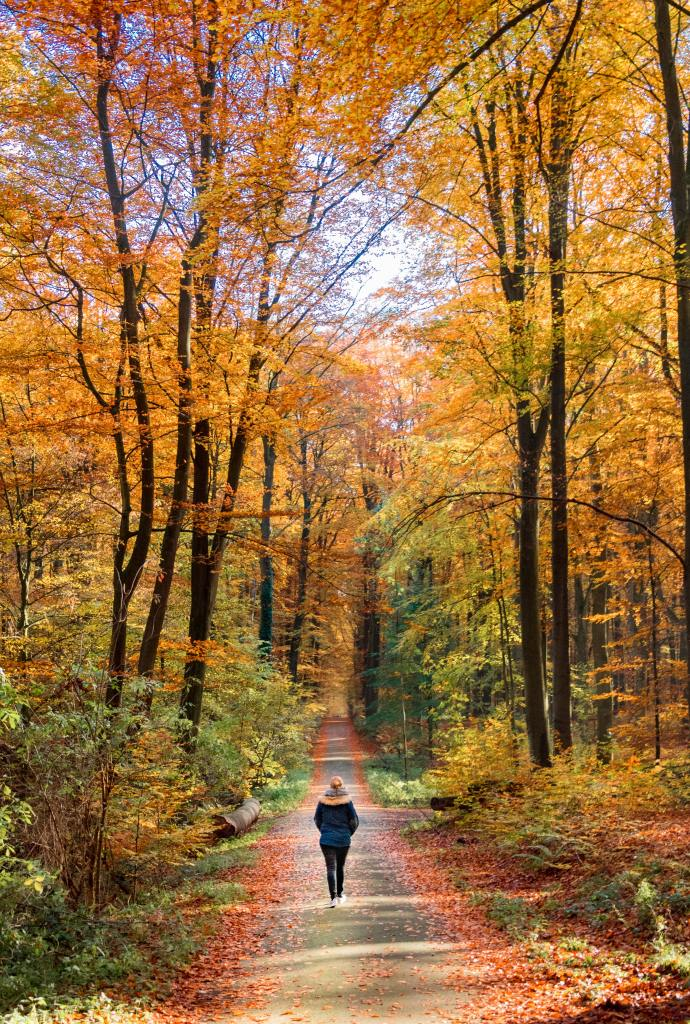 Woman walking on a path through a forest. Trees with autumn leaves of orange and brown are on both sides.